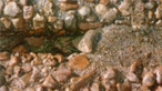 Exposed Aggregate Filler